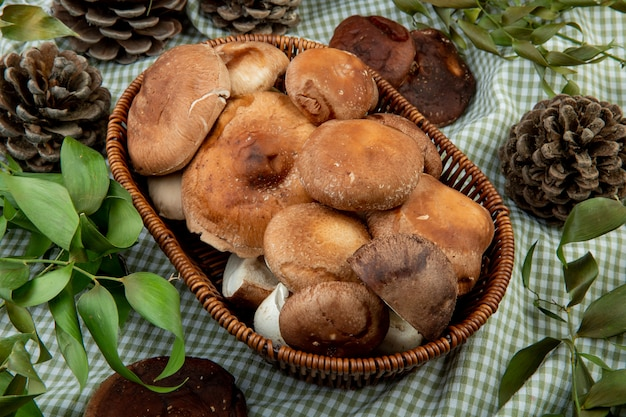 Side view of fresh mushrooms in a wicker basket and cones with green leaves on plaid fabric