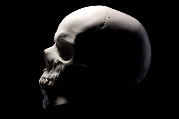 Side view of gypsum model of the human skull isolated on black background with clipping path. concept of terror, physiology learning and drawing.