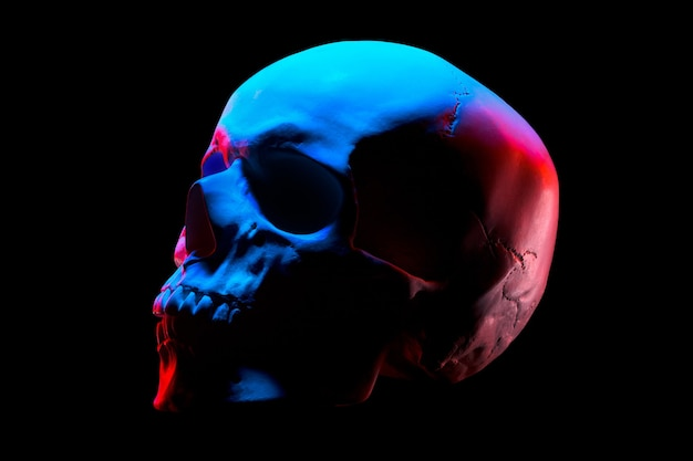 Side view of gypsum model of the human skull in neon lights