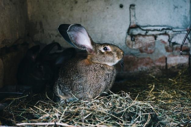 Vista laterale di una lepre che si siede sull'erba