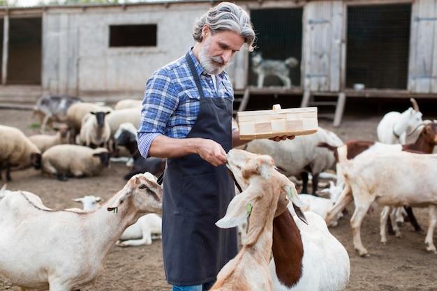 Side view man feeding goats