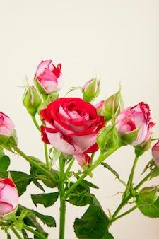 흰색 배경에 장미 꽃 봉오리와 화려한 장미 꽃의 꽃다발의 측면보기