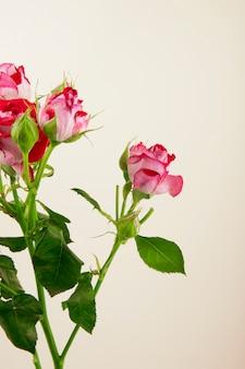 白い背景の上のバラのつぼみとカラフルなバラの花の花束の側面図