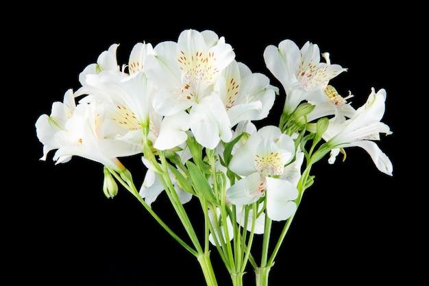 검은 배경에 고립 된 흰색 alstroemeria 꽃의 꽃다발의 측면보기