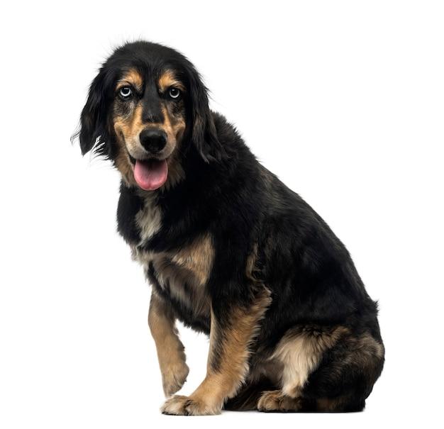 Вид сбоку гибрида собаки, смотрящей в камеру, изолированную на белом