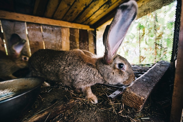 Боковой вид кролика в клетке