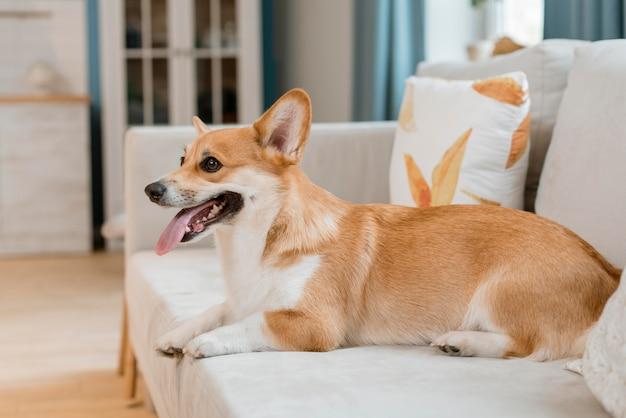 Вид сбоку очаровательны собаки на диване