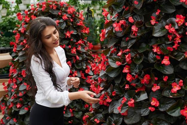 現代の温室で美しさと美しい赤い花の香りを楽しんでいる魅力的な若いブルネットの女性の側面図。花のお手入れと販売の準備のコンセプト。