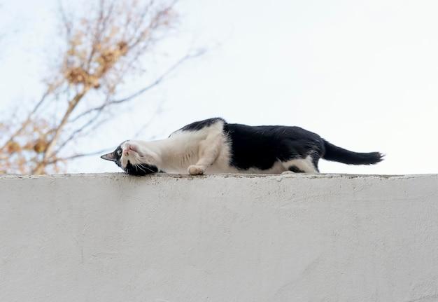 Кошка на стене на ферме, вид сбоку