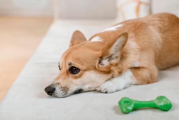 Вид сбоку милая собака на диване с игрушкой