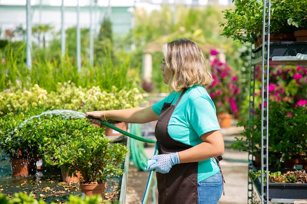 호스에서 냄비 식물에 물을 여성 정원사의 측면보기. 온실에서 꽃을 성장 파란색 셔츠와 앞치마를 입고 백인 금발 여자. 상업 원예 활동 및 여름 개념