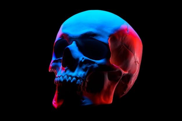 クリッピングパットで黒い背景に分離されたネオンライトで人間の頭蓋骨の石膏モデルの側面図