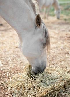農場で干し草を食べる馬の側面図 無料写真