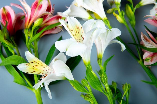 회색 배경에 분홍색과 흰색 색 alstroemeria 꽃의 측면보기