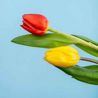 Вид сбоку красных и желтых цветных тюльпанов, изолированных на синем столе