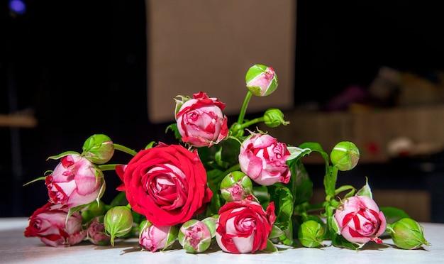 흰색 배경에 새싹과 녹색 잎과 빨간 장미의 측면보기