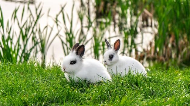 草の上に座っている2匹の2匹のウサギの側面図