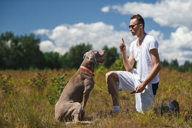 フィールドに座ってトレーニング中に男性の所有者の手に焦点を当てたワイマラナー犬の側面図