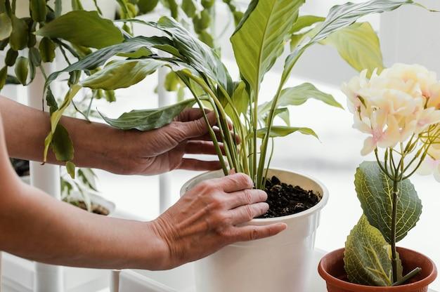 실내 식물을 돌보는 여자의 모습