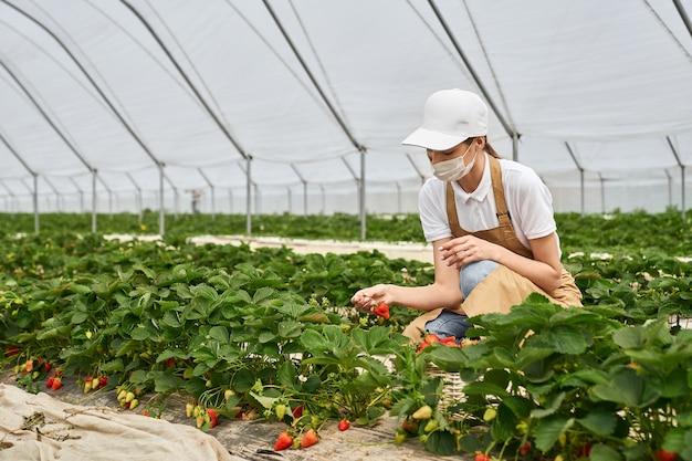 ベージュのエプロンと白い帽子とコロナウイルスがおいしいベリーを選ぶことに対する特別な保護マスクの若い美しい女性の側面図。イチゴを収穫するプロセスの概念。