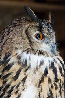 Side view of owl.