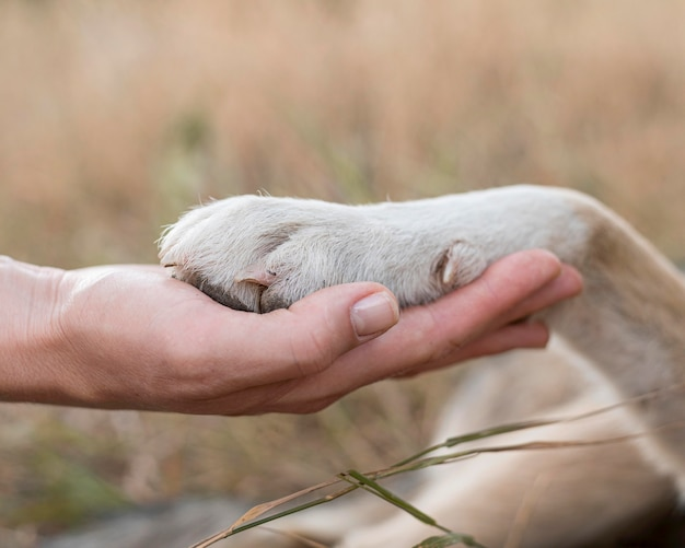 Side view of person holding dog's paw