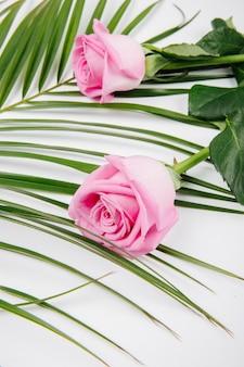 Vista laterale delle rose rosa di colore su una foglia di palma su fondo bianco Foto Gratuite
