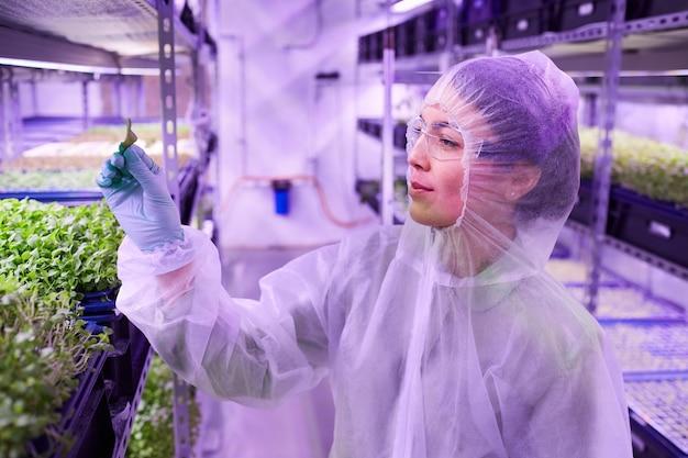 Side view portrait of female agricultural engineer holding green leaf and smiling while working in nursery greenhouse, copy space