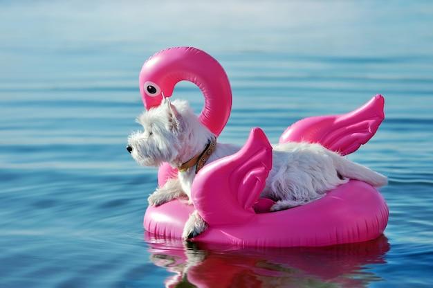 Боковой портрет белой собаки на резиновый фламинго