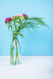 Side view of purple color turkish carnation flowers with asparagus in a glass bottle on blue background with copy space