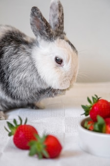 Side view of a rabbit near red strawberries