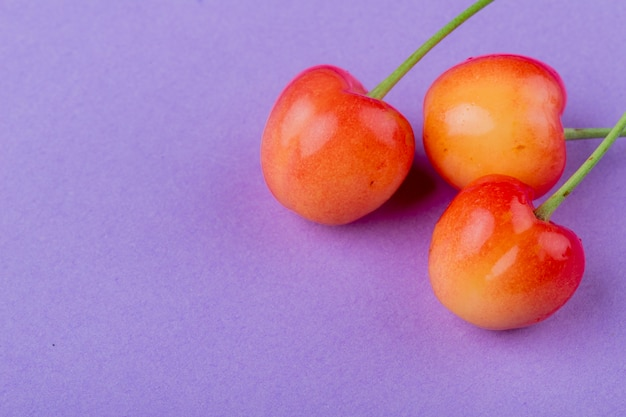 Side view of ripe rainier cherry isolated on lilac color with copy space