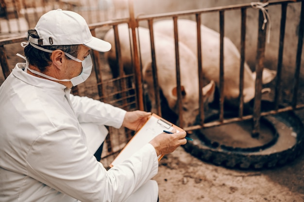 Side view of veterinarian in white coat, mask and hat holding clipboard and checking on pigs while crouching next to cote.
