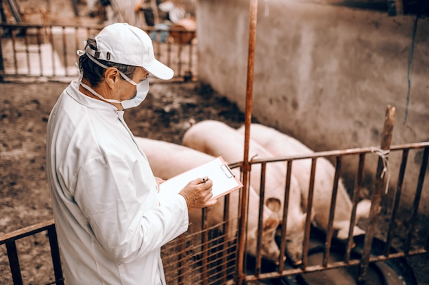 Side view of veterinarian in white coat, mask and hat holding clipboard and checking on pigs while standing next to cote.