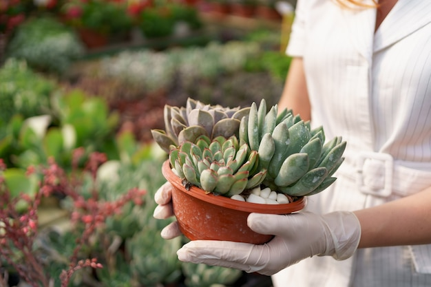 Side view at woman hands wearing rubber gloves and white clothes holding succulents or cactus in pots with other green plants