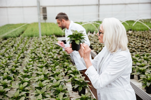 Side view of woman and man working with plants in garden