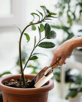 Vista laterale della donna che utilizza la cazzuola sulla pianta da interni