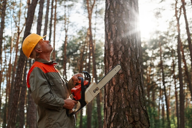 Side view of woodsman with chainsaw in hands looking at tree for cutting