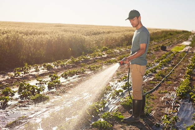 Side view at young male worker watering crops at vegetable plantation outdoors lit by sunlight, copy space