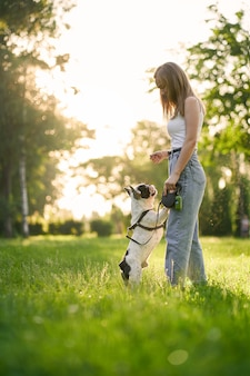 Side view of young woman training french bulldog in city park. purebred pet standing on hind feet, smelling treats from hand of female dog owner, summer sunset on background. animal training concept.