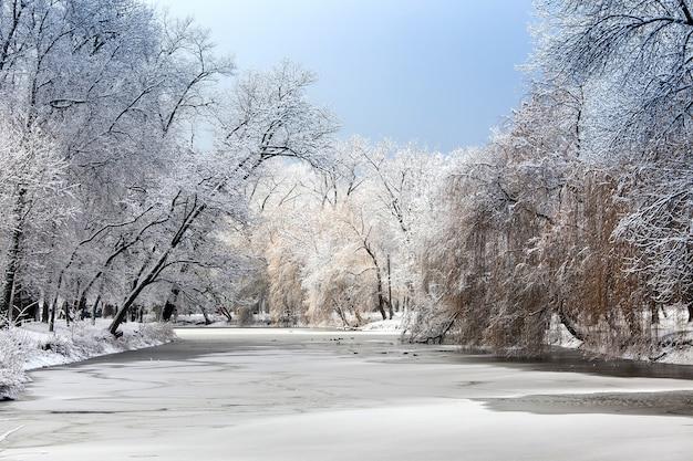 凍った池に新鮮な雪と湖sideの木々と白い冬の風景