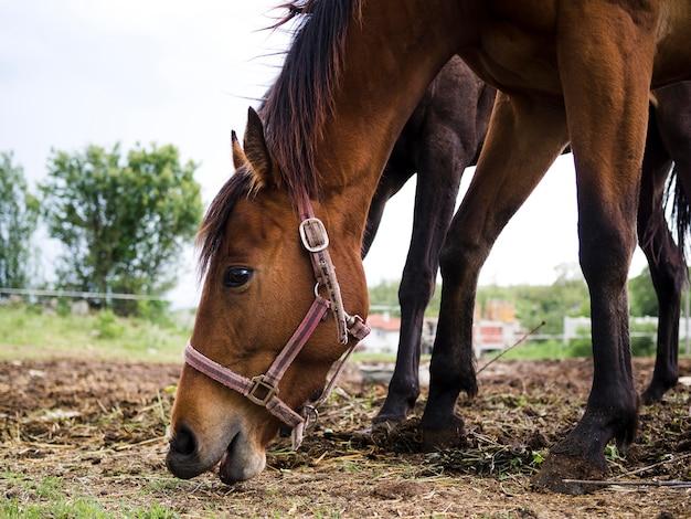 Боком красивая лошадь ест с земли
