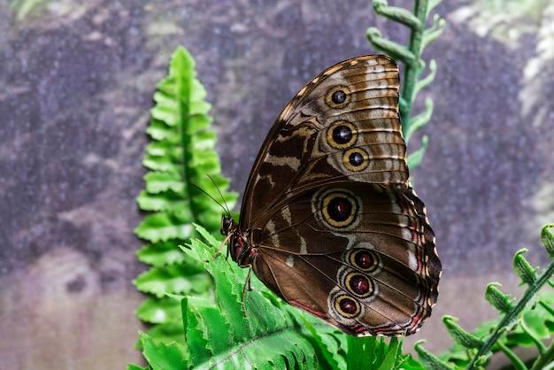 Sideways brown butterfly on leaf