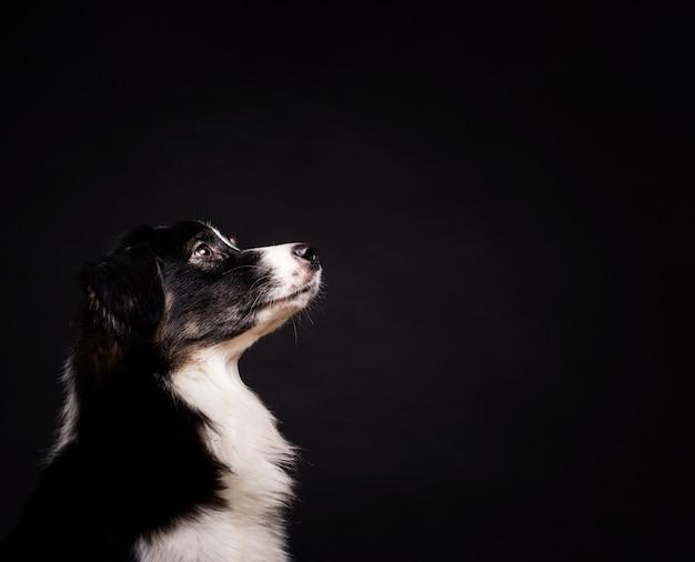 Боком милая собака стоит