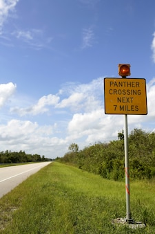 Signal about panther crossing road, everglades