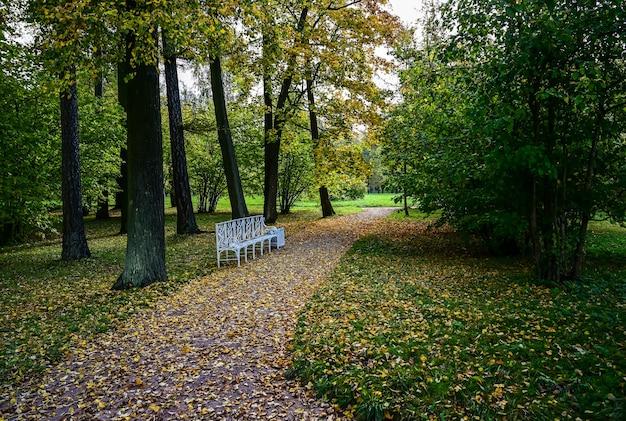 고요. 프라이버시를 위한 벤치. 묵상. 가을 숲. 극적인 특이한 장면. 빨간색과 노란색 단풍입니다. 뷰티월드.