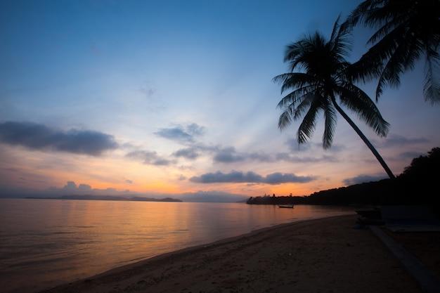 Silhoueet coconut tree with sunrise sky