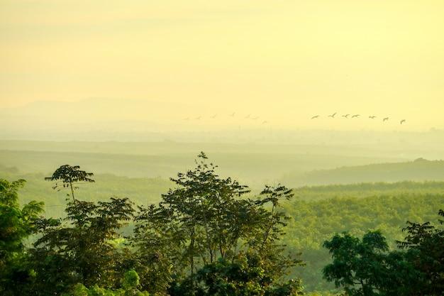 朝飛んでいる農村とsilhoueiie鳥の森の丘の上の日の出の最初の光