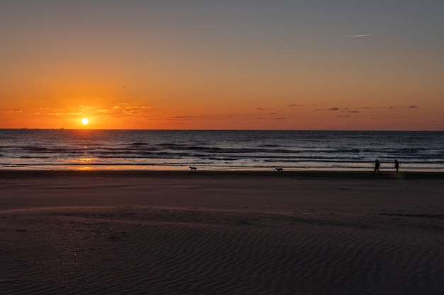 Silhouete пары и собак. красивый ландшафт захода солнца на северном море с оранжевым небом и отражением внушительного солнца золотым на волнах в. удивительный летний закат вид на пляж.