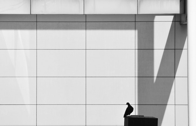 Silhouette of alone pigeon on steel pole in the city
